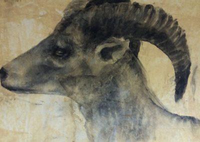 Bouquetin - Fusain sur papier 32 cm x 50 cm