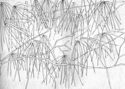 Branchages - croquis au feutre noir - 24 cm x 32 cm