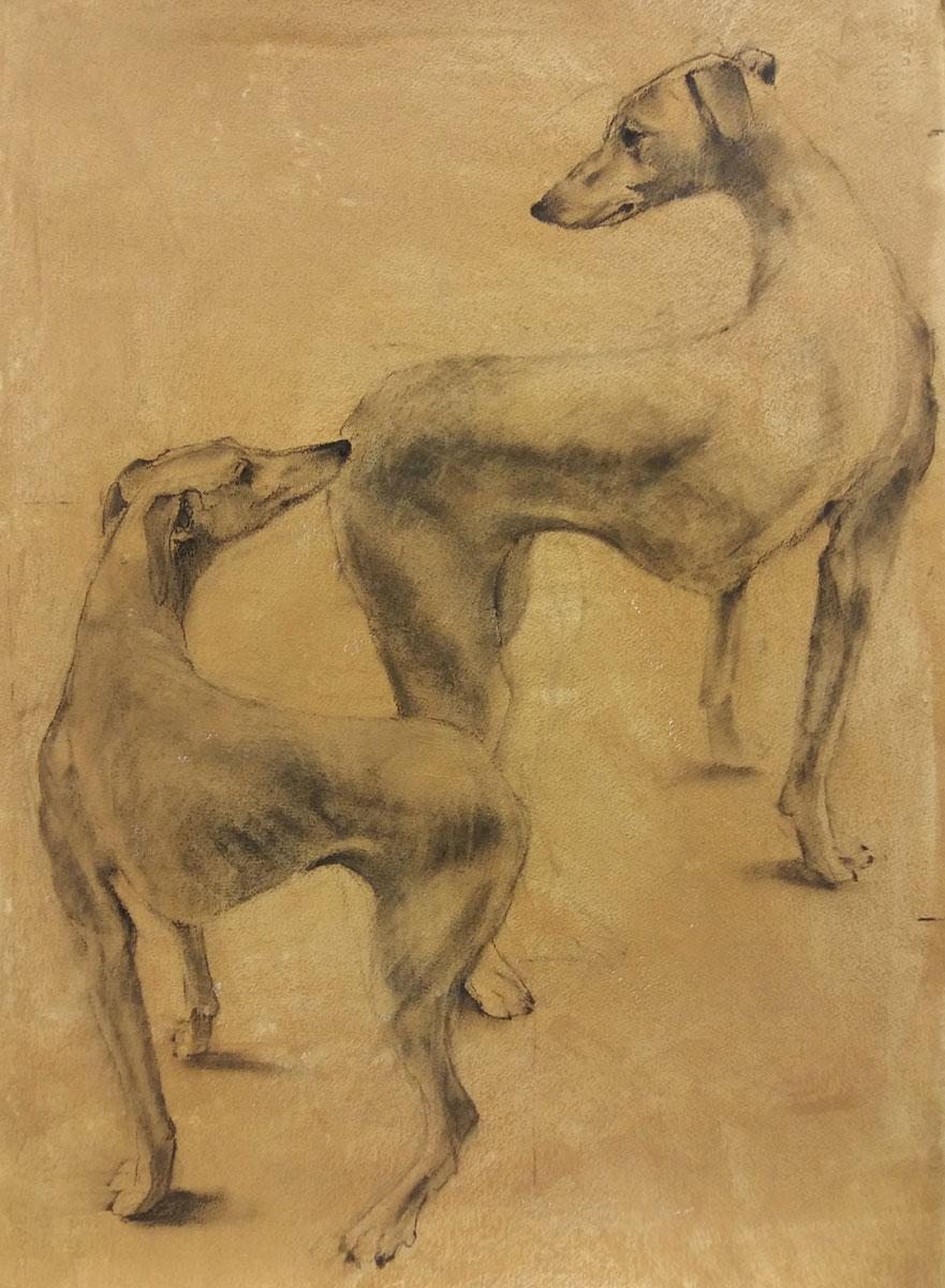 Deux chiens - Etude au fusain - 77 x 57 cm