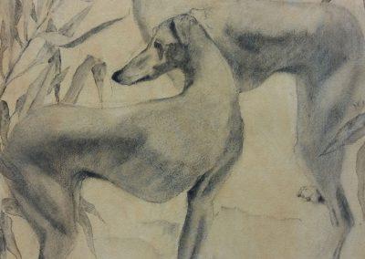 Deux chiens dans les feuillages - Etude au fusain - 77x57 cm
