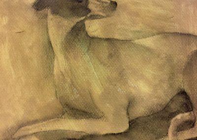 Etude de chien | détail - Fusain sur papier