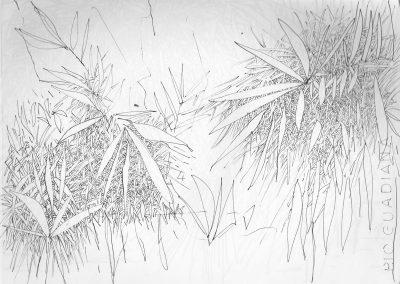 Feuillages - croquis au feutre noir - 24 cm x 32 cm