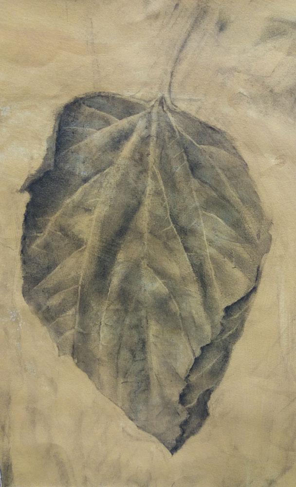 Feuille de mûrier fusain sur papier 31 cm x 22 cm