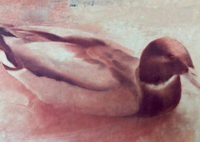 Le canard gris - pastel sur papier 32 cm x 50 cm