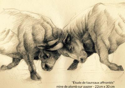 Étude de taureaux affrontés - mine de plomb sur papier - 22cm x 30 cm