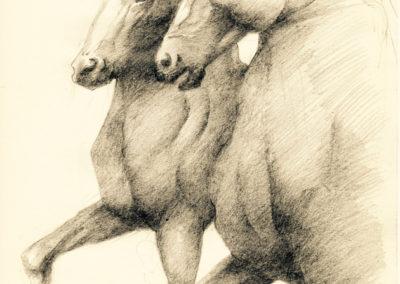 Étude pour Xanthos et Balios - mine de plomb sur papier - 30cm x 22 cm
