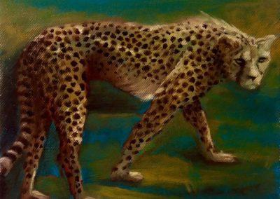Guépard le soir - Huile sur toile - 20 cm x 20 cm
